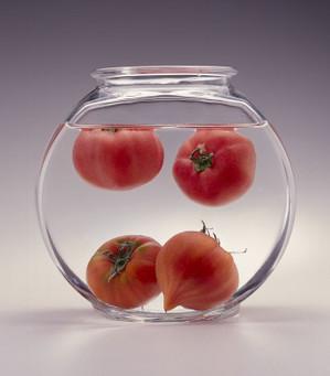 Zukan_tomato4